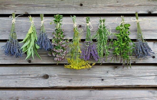 Душистые растения